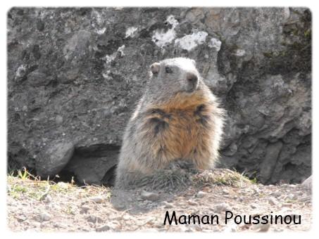 marmotte 1 blog