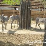 A la découverte de Paris et du Zoo de Vincennes