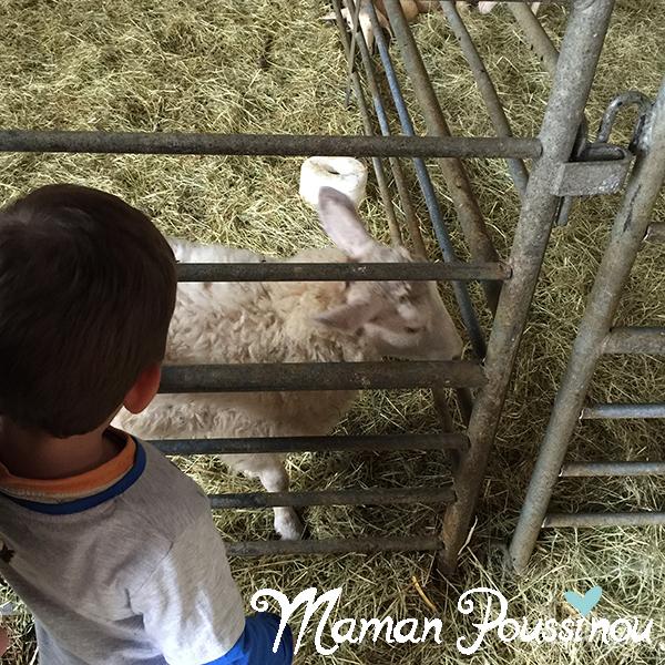 agneau-petit-bois-sagy
