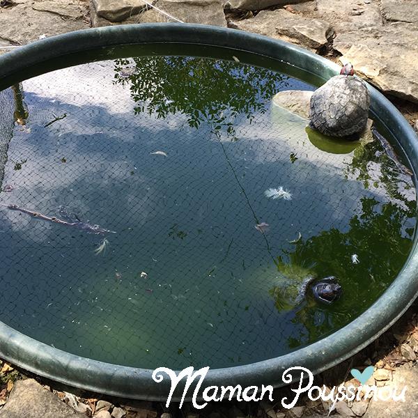 tortue-eau