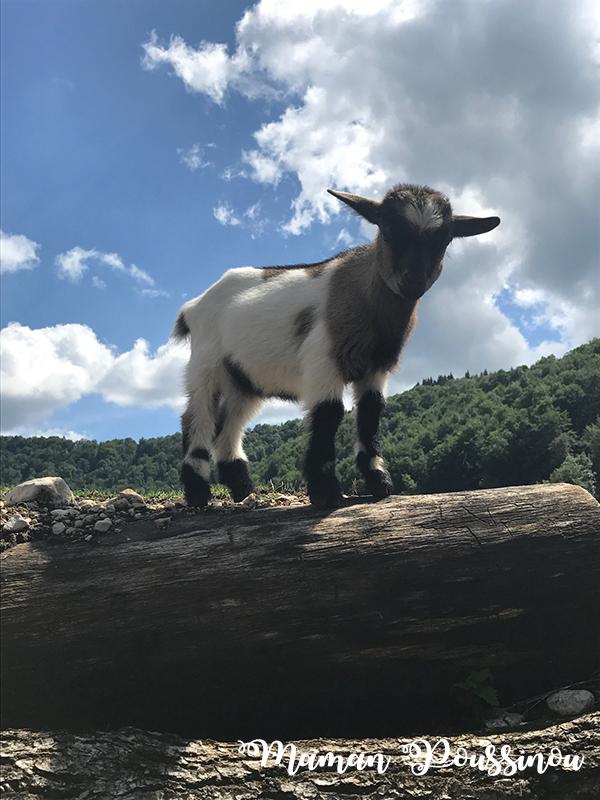 Vallée du Hérisson – Parc animalier Héria – Massif du Jura