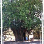 Et si grâce à ce blog un arbre était planté ?