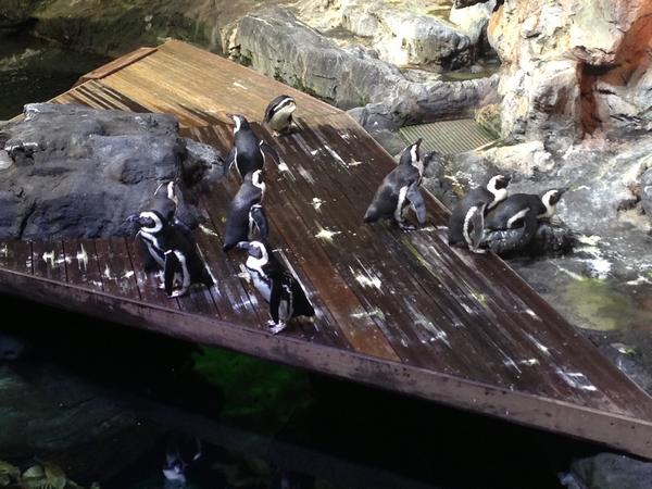 Aquarium mare nostrum montpellier manchots