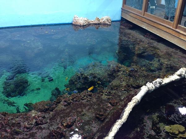 aquarium mare nostrum montpellier lagon