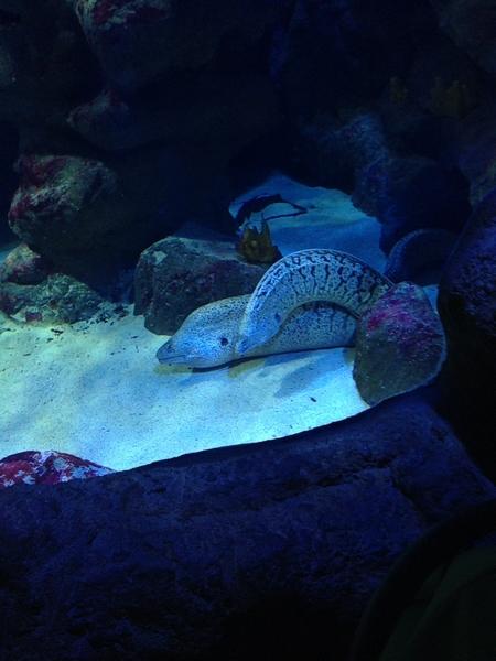 aquarium mare nostrum montpellier murènes