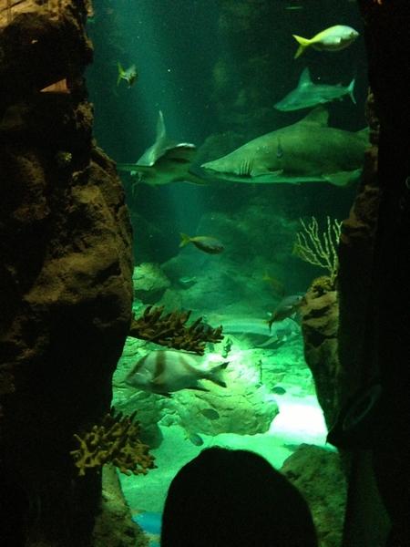 aquarium marenostrum montpellier requins