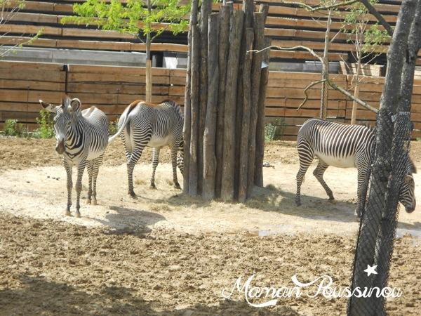 You are currently viewing A la découverte de Paris et du Zoo de Vincennes