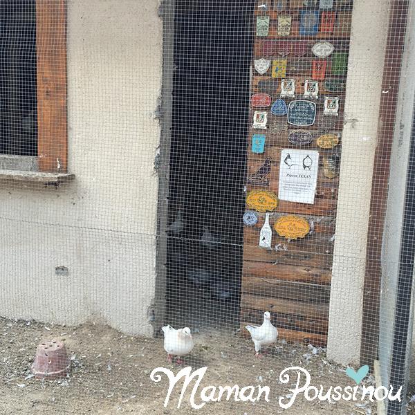 pigeons-petit-bois-sagy
